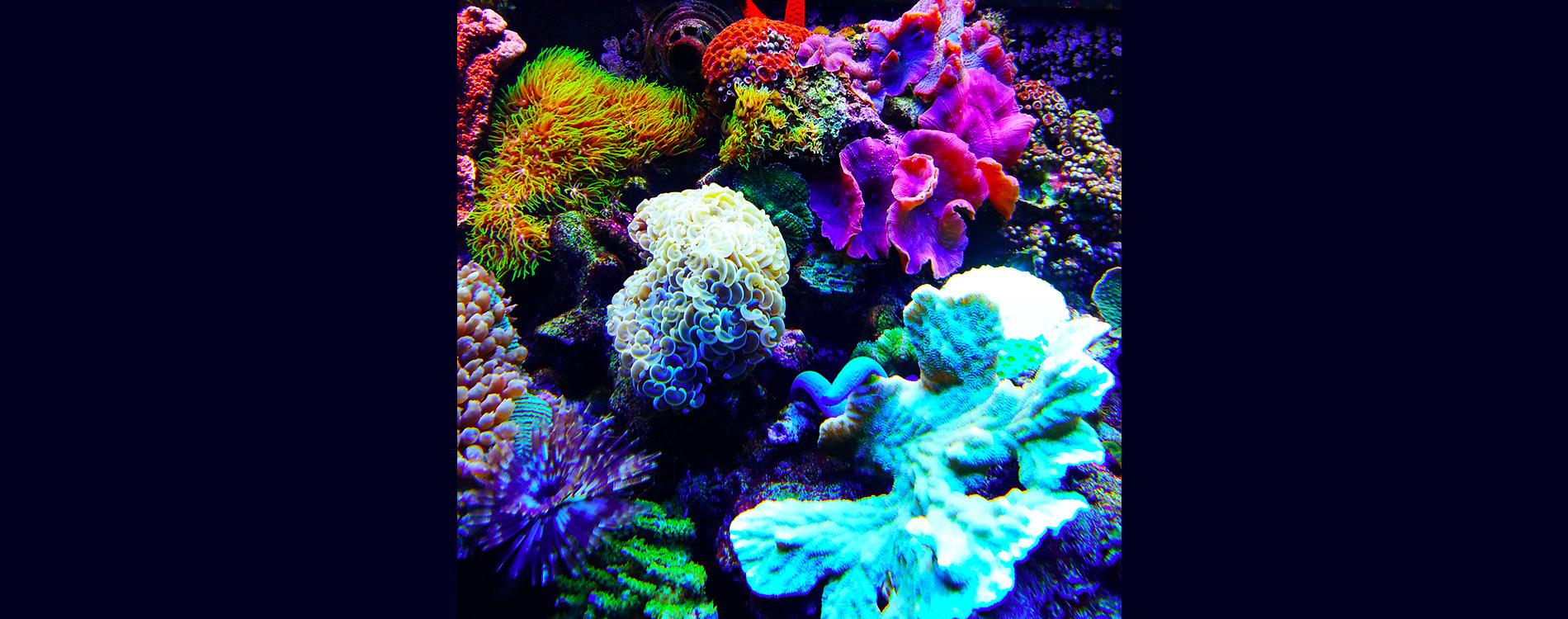 complete aquarium   gallery