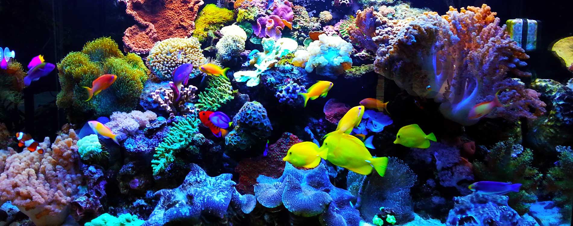 Complete Aquarium - Home